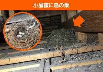 小屋裏の鳥の巣