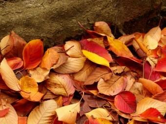 溜まった落ち葉