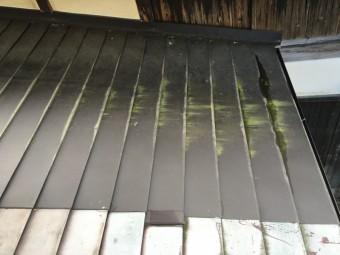 苔が発生し、汚れてしまった屋根