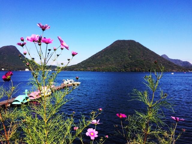 コスモスと湖と緑豊かな山