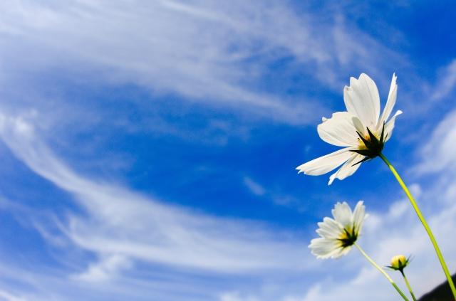 白い花と秋の空