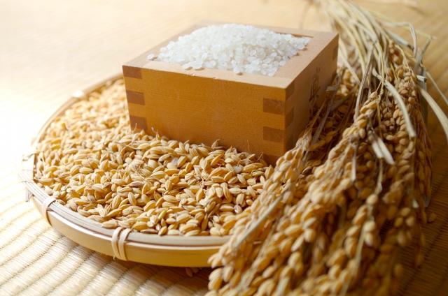 ザルに入れられた日本のお米