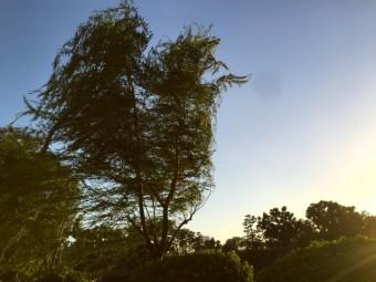 強風に吹かれる木