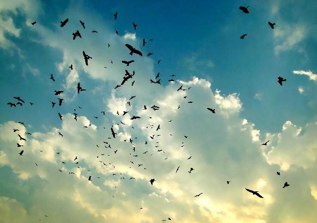 集団で飛んでいる野鳥の群れ
