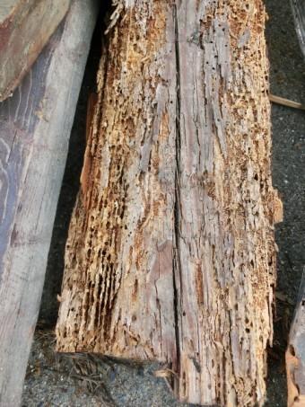 シロアリによる食害を受けた木材
