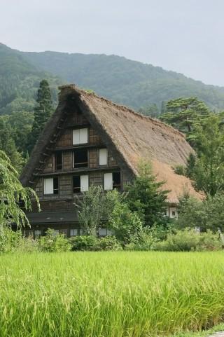 日本が誇る伝統ある茅葺屋根