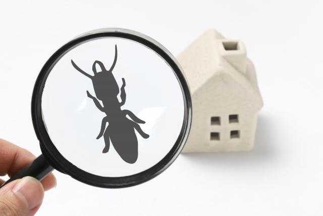 ルーペで見た家の模型とシロアリの影