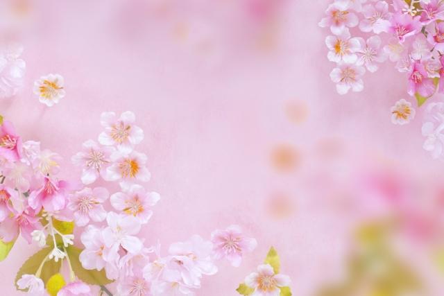 ピンクと淡い白がが混ざった桜