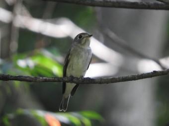 木の枝に留まる鳥