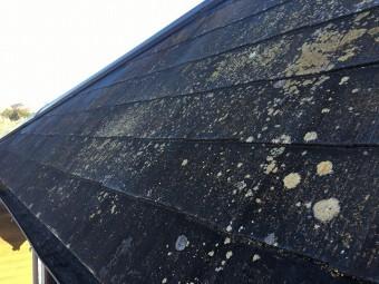 コケが生えた黒色のコロニアル屋根