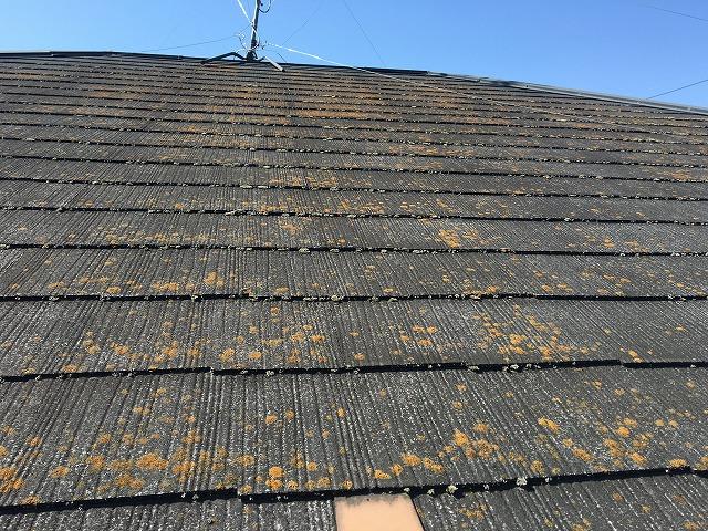 コケが生えたコロニアル屋根