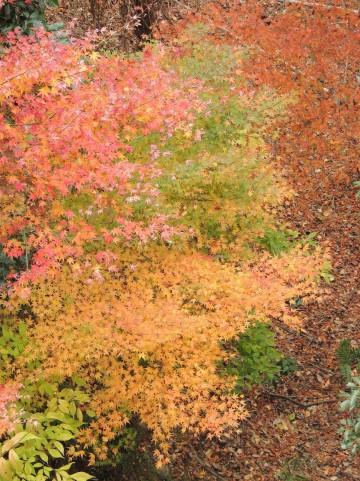 赤緑黄と葉の色が染まった木