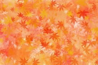一面に広がる紅に染まったモミジの葉