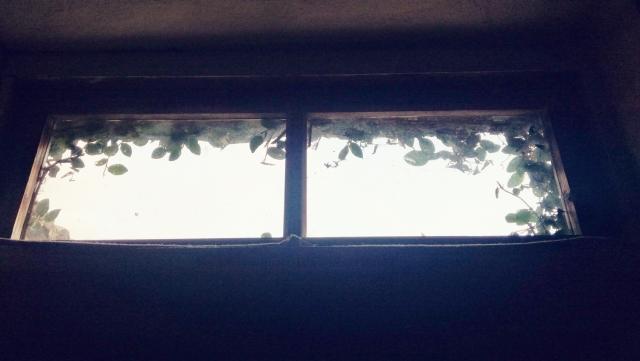ツタが生えた天窓