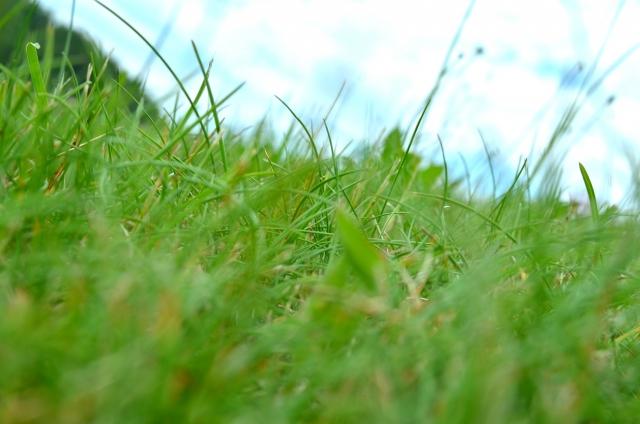 生い茂る草