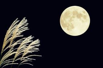月夜に照らされた秋のススキ