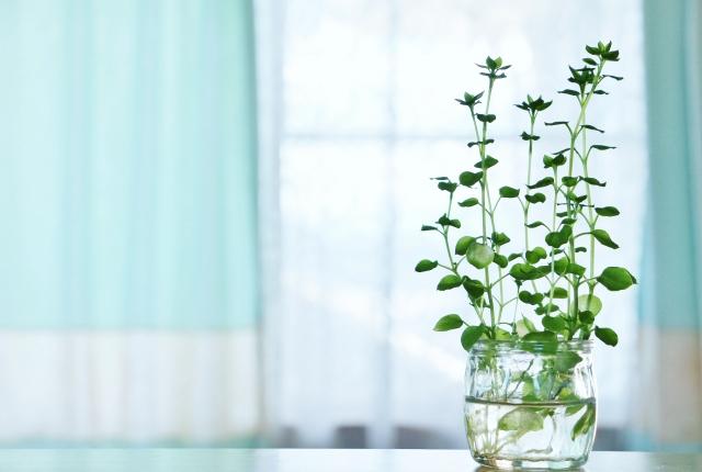 窓辺付近の植物とデスク