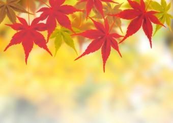 赤色に染まったモミジの葉